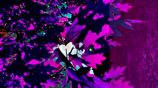 purple leaves